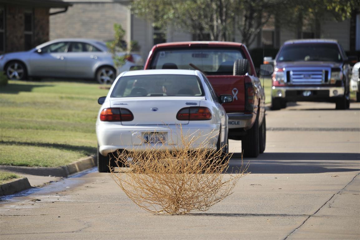 Okarche tumbleweed rolling down Eischen Avenue...
